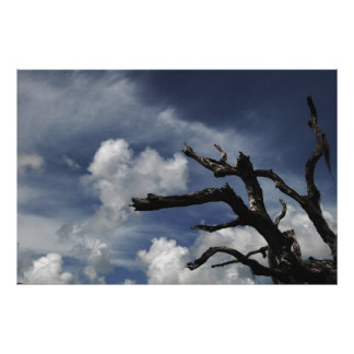 Tree and sky posters