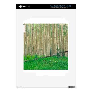 Tree Aspen Grove Colorado Decals For iPad 3