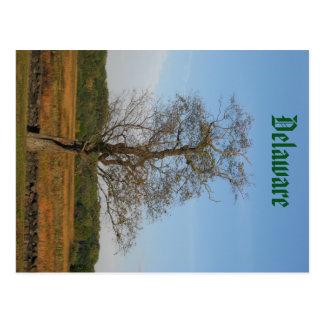Tree at Brandywine Postcard
