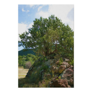 Tree at Capulin Volcano Poster