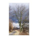 Tree at JHWR Canvas Print