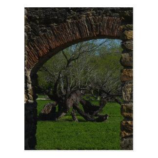 Tree at Mission Espada Postcard