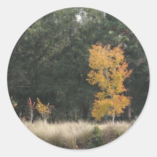Tree at Sholom Park Classic Round Sticker