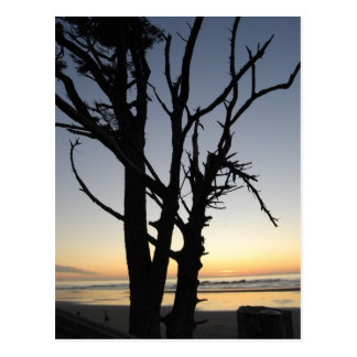 tree at sunset on the beach postcard