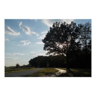 Tree at Valley Forge Poster/ Print
