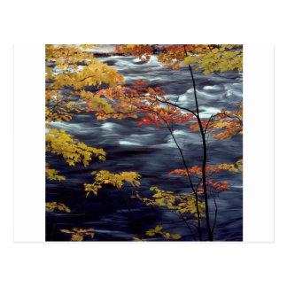Tree Autumn A Rushing River Postcard