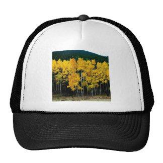 Tree Autumn Birch Trucker Hat