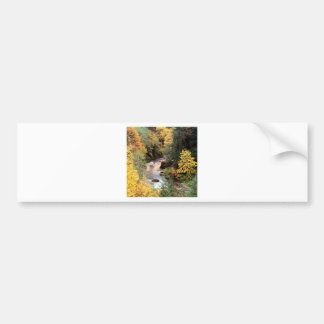 Tree Autumn Color Coquille River Bumper Stickers