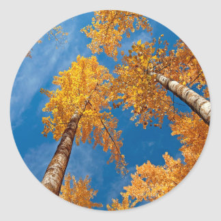 Tree Autums Woods Sky Classic Round Sticker