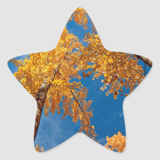Tree Autums Woods Sky Star Sticker