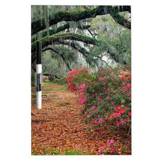 Tree Azaleas And Live Oaks Plantation Dry-Erase Board