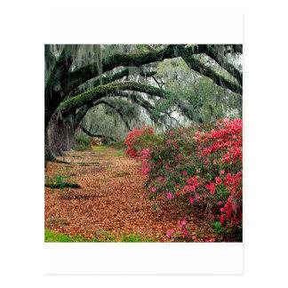Tree Azaleas And Live Oaks Plantation Post Card