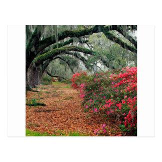 Tree Azaleas And Live Oaks Plantation Post Cards