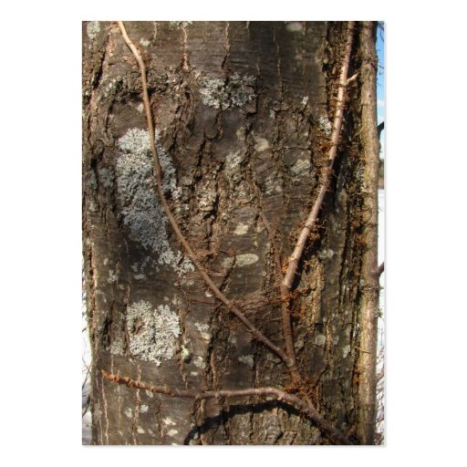 Tree Bark 33 ~ ATC Large Business Cards (Pack Of 100)