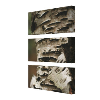 Tree Bark Stretched Canvas Prints