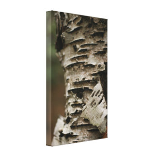 Tree Bark Gallery Wrapped Canvas