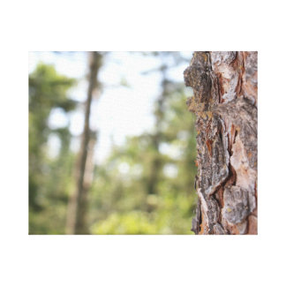 Tree Bark & Forest Canvas Print