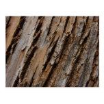 Tree Bark I Natural Abstract Textured Design Postcard