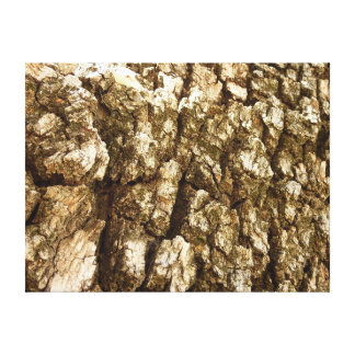 Tree Bark II Natural Abstract Textured Design Canvas Print