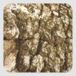 Tree Bark II Natural Abstract Textured Design Square Sticker