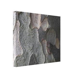 Tree Bark macro photography Canvas Prints