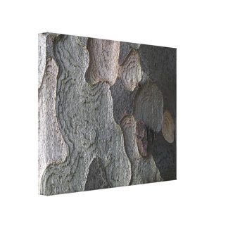 Tree Bark macro photography Canvas Print