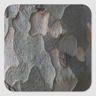 Tree Bark macro photography Square Sticker