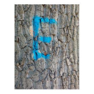 Tree Bark, Monogram E, Blue Brown, Nature Postcard