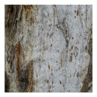 Tree Bark Pattern 4 Poster