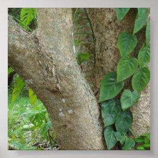 Tree Bark Photo Backdrop Poster