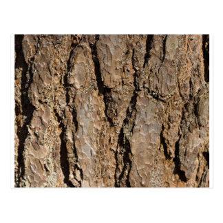 TREE BARK POSTCARD