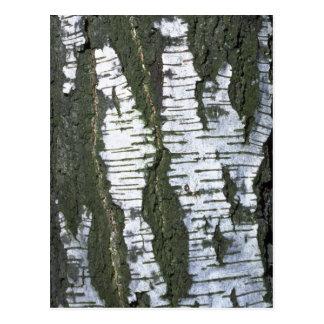 Tree bark texture postcard