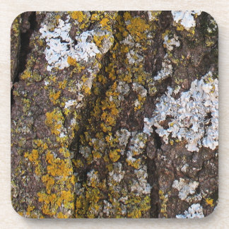 Tree Bark With Lichens Beverage Coaster