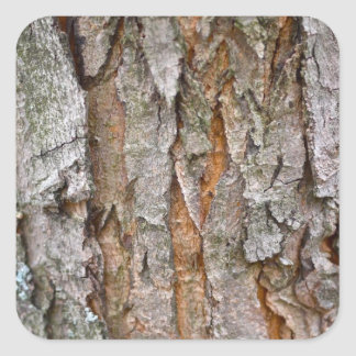 Tree Bark, Wood, Trees Forest Square Sticker