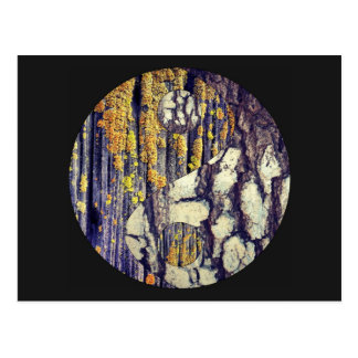 Tree Bark Yin Yang Postcard