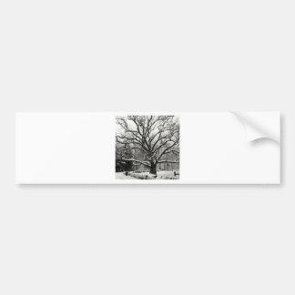 Tree Bedford Oak New York City Bumper Sticker