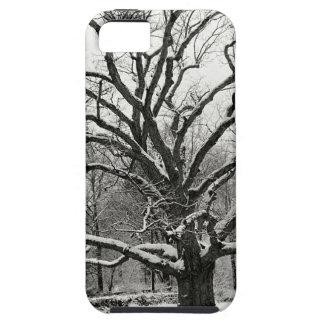 Tree Bedford Oak New York City iPhone 5 Covers