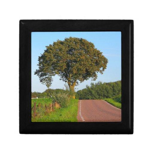 Tree Beech Road Keepsake Boxes