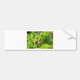 Tree Blooms - Vaccinium Cylindraceum Bumper Stickers