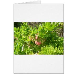 Tree Blooms - Vaccinium Cylindraceum Card