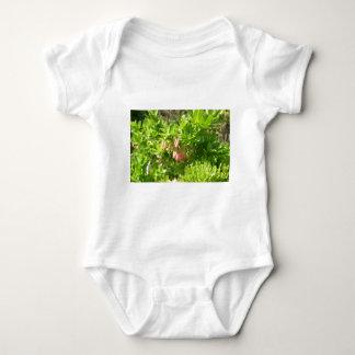 Tree Blooms - Vaccinium Cylindraceum T Shirt