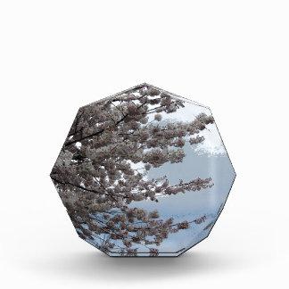 Tree Blossom Award