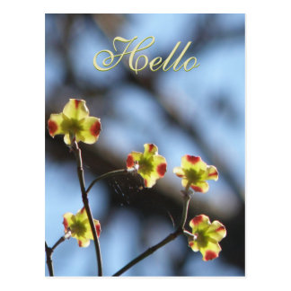 Tree Blossom Hello  Postcard