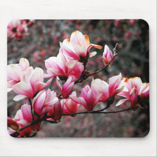 Tree blossoms of Georgetown, Washington, DC Mouse Pad