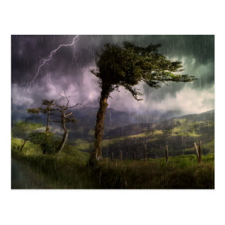 Tree Blowing in the Wind During a Thunder Storm Postcard