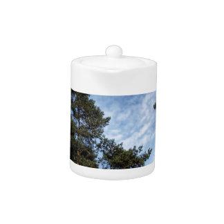 Tree Blue Pines