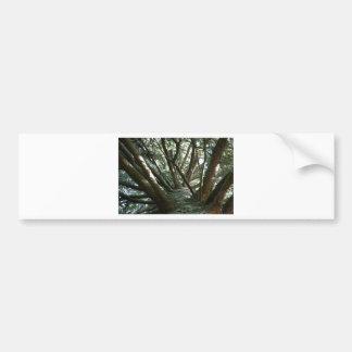 Tree Braches Nature Bumper Sticker