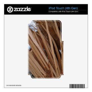 Tree Branch Cracked iPod Touch 4G Decal