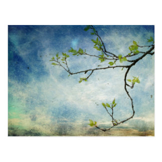 Tree Branch Over Textured Sky Postcard