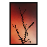 Tree branch silhouette posters